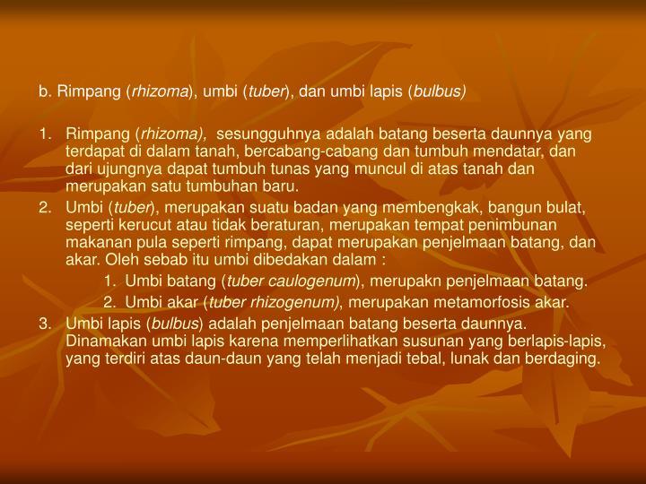 b. Rimpang (