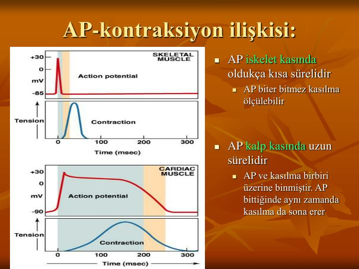AP-kontraksiyon ilişkisi: