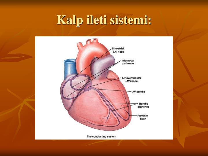 Kalp ileti sistemi