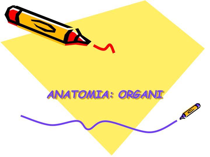ANATOMIA: ORGANI