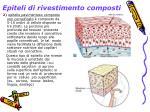 epiteli di rivestimento composti1