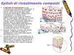 epiteli di rivestimento composti3