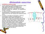 ghiandole esocrine