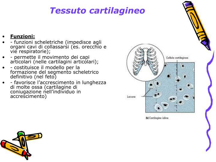 Tessuto cartilagineo