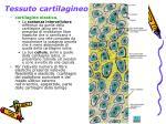 tessuto cartilagineo4