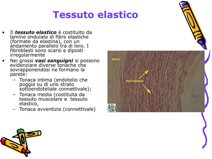 Tessuto elastico