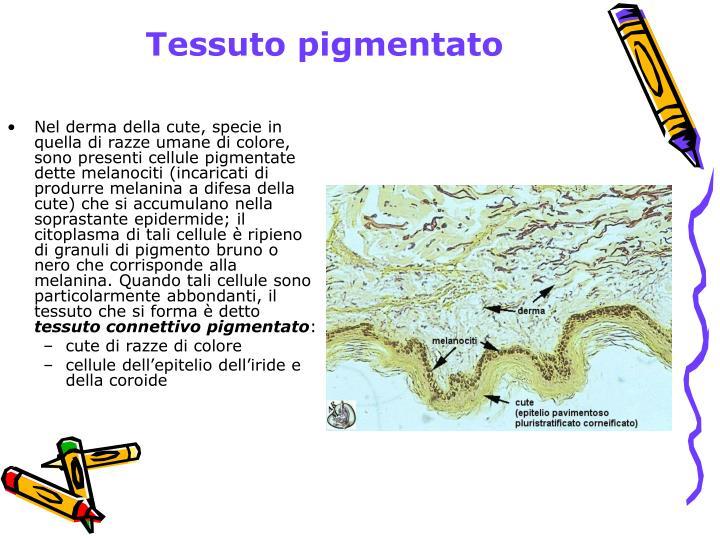 Tessuto pigmentato