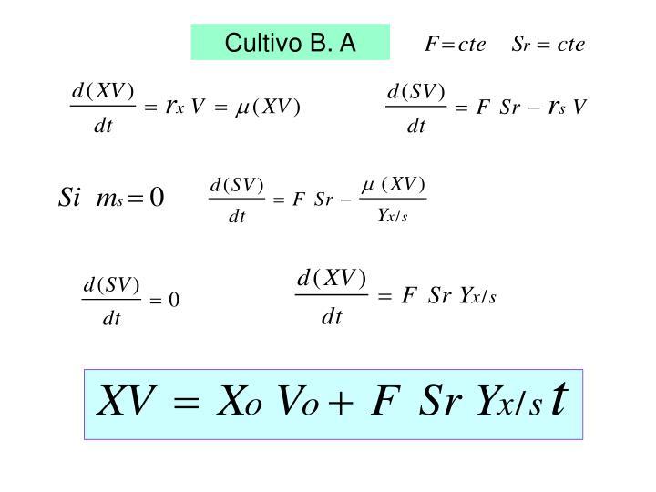 Cultivo B. A