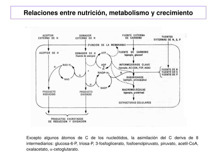 Relaciones entre nutrición, metabolismo y crecimiento