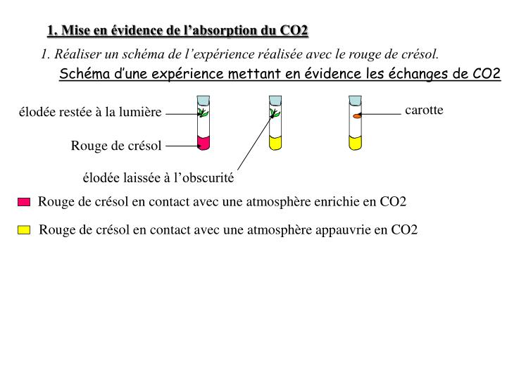 1. Mise en évidence de l'absorption du CO2