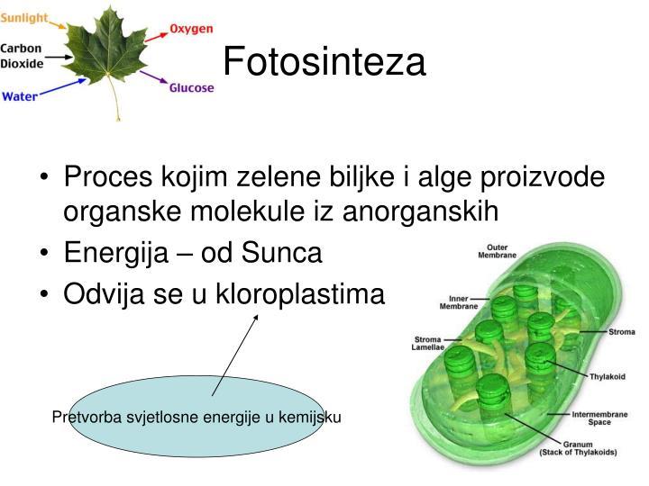 Fotosinteza