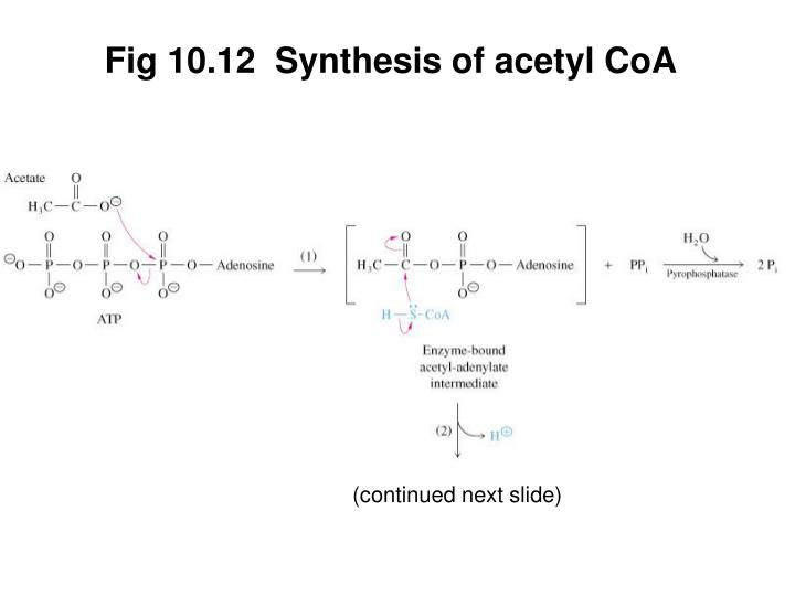 Fig 10.12  Synthesis of acetyl CoA