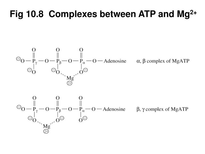 Fig 10.8  Complexes between ATP and Mg