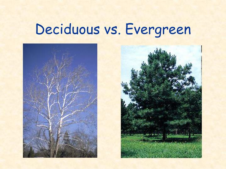 Deciduous vs. Evergreen