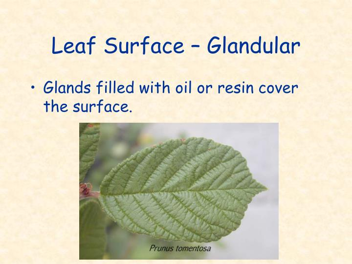Leaf Surface – Glandular