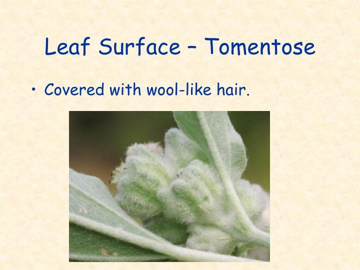 Leaf Surface – Tomentose