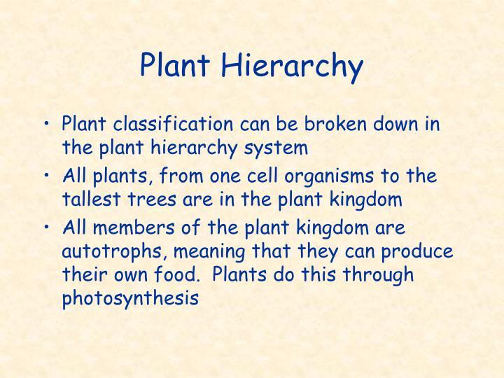 Plant Hierarchy