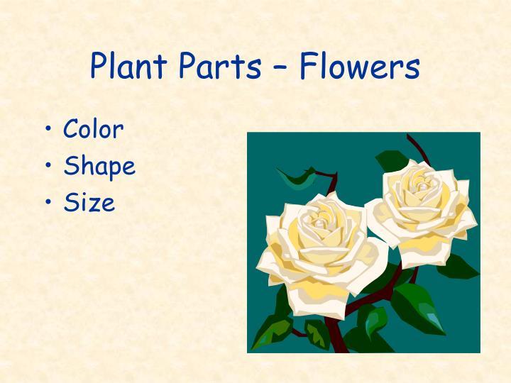 Plant Parts – Flowers