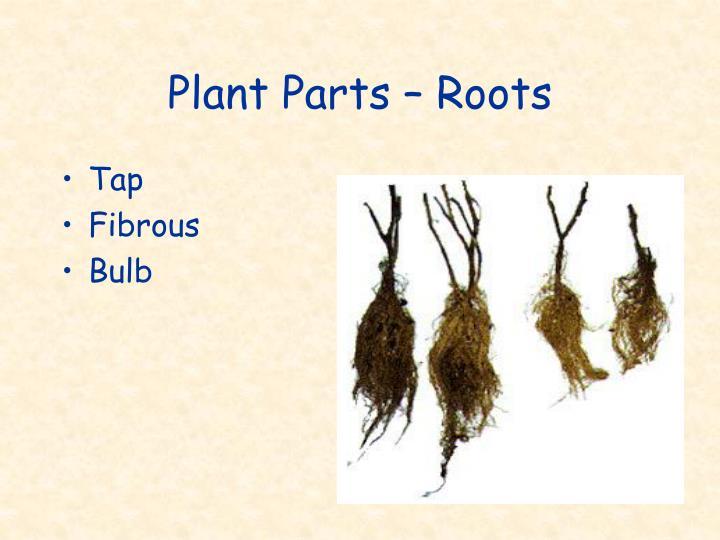 Plant Parts – Roots
