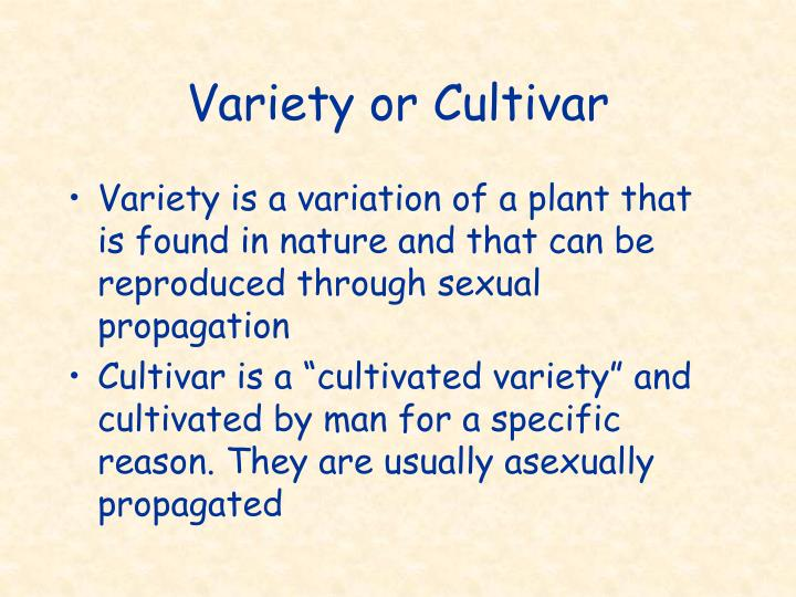 Variety or Cultivar