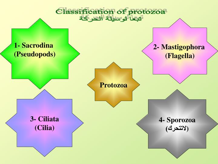 Classification of protozoa