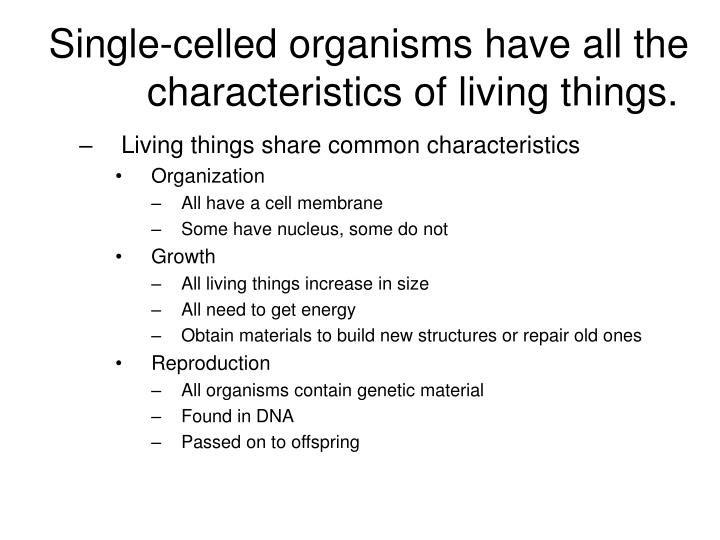 Do All Single Celled Organisms Need Food