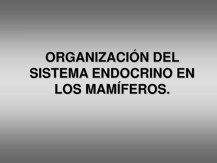 ORGANIZACIÓN DEL SISTEMA ENDOCRINO EN LOS MAMÍFEROS.