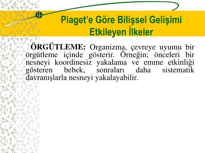 Piaget'e Göre Bilişsel Gelişimi