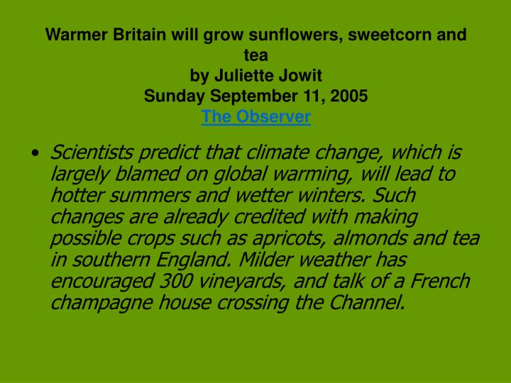 Warmer Britain will grow sunflowers, sweetcorn and tea