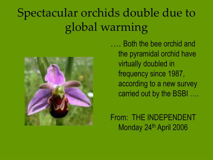 Spectacular orchids double due to global warming