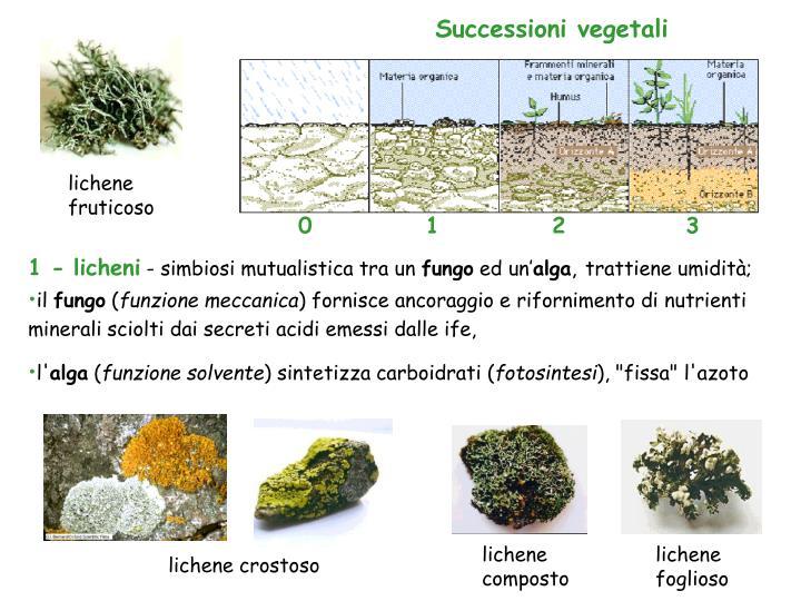 lichene fruticoso