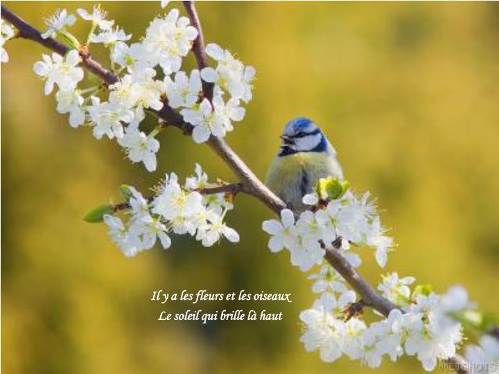 Il y a les fleurs et les oiseaux