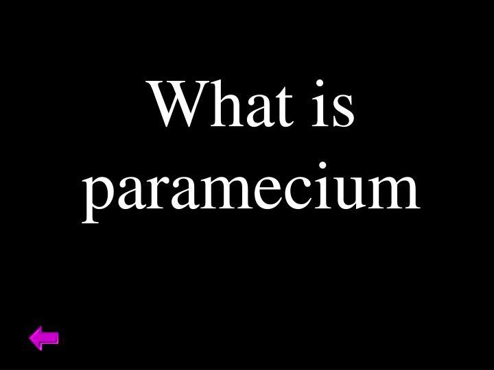 What is paramecium