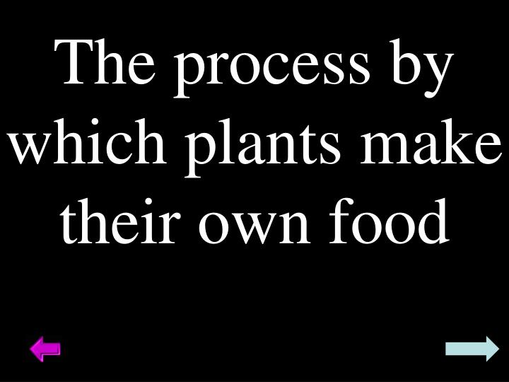 The process by which plants make their own food