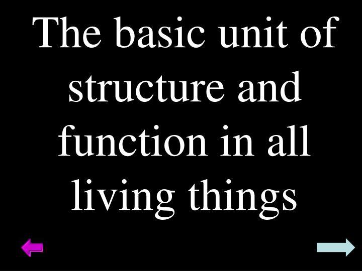 The basic unit of