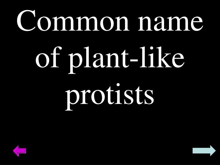 Common name of plant-like protists