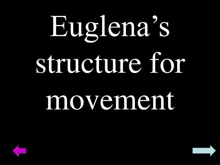 Euglena's structure for movement