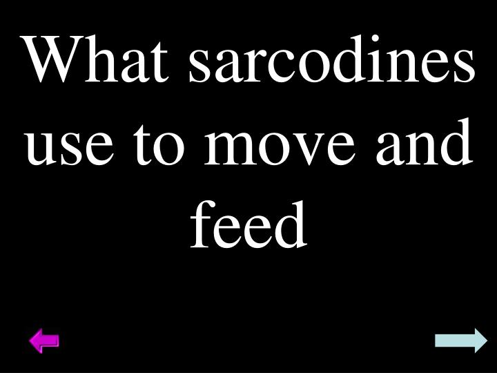 What sarcodines use to move and feed