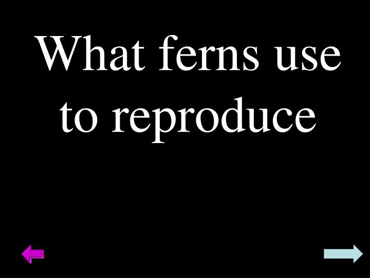 What ferns use to reproduce