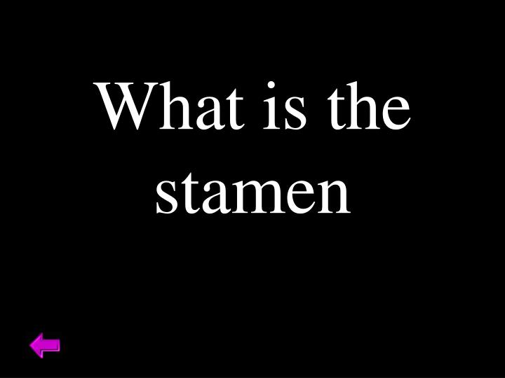 What is the stamen