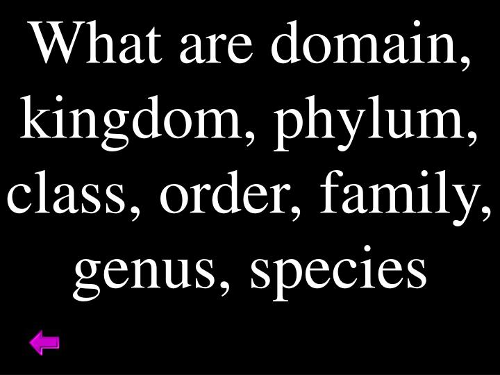 What are domain, kingdom, phylum, class, order, family, genus, species