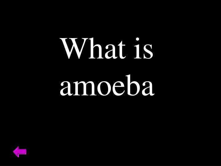 What is amoeba