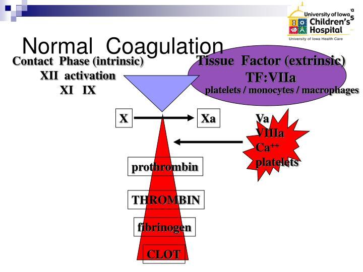 Normal  Coagulation