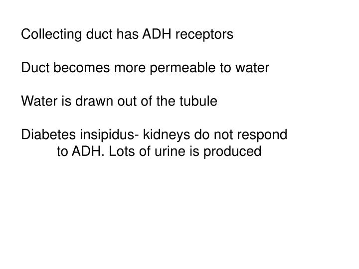 Collecting duct has ADH receptors