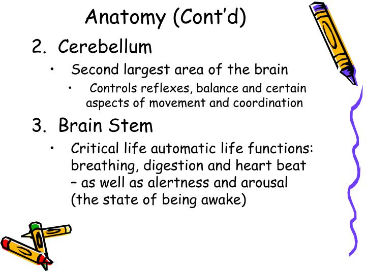 Anatomy (Cont'd)
