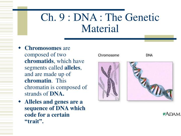 Ch 9 dna the genetic material