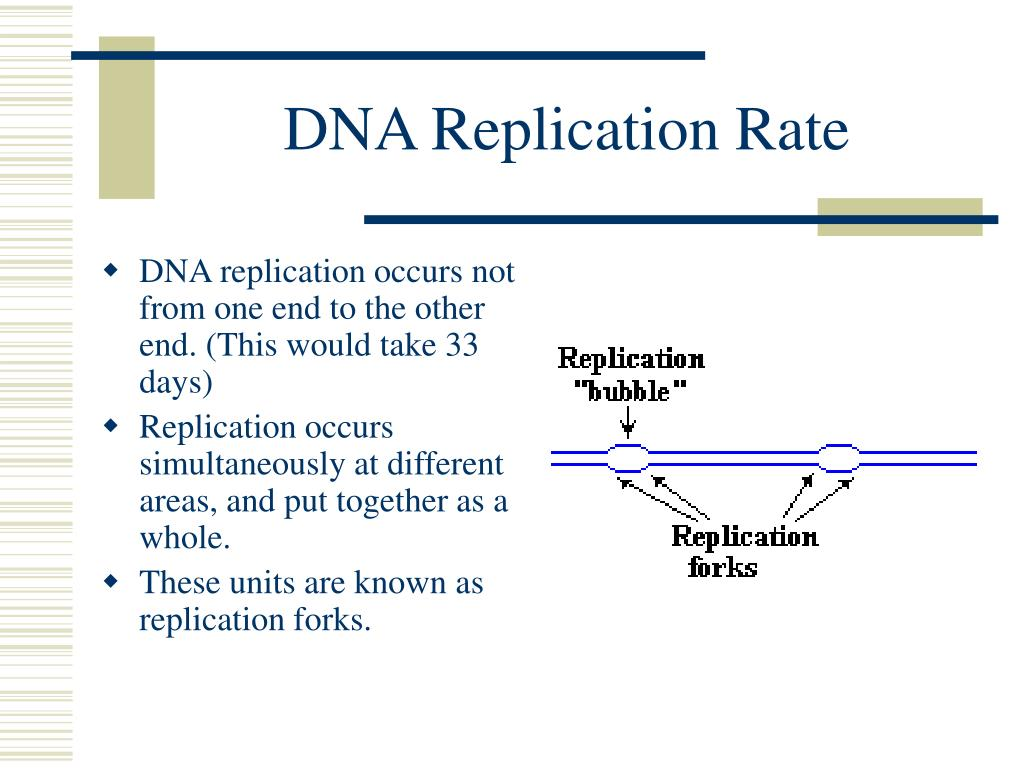 DNA Replication Rate