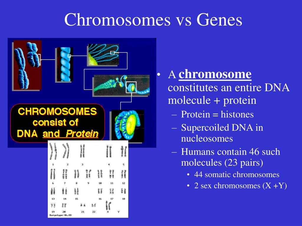 Chromosomes vs Genes