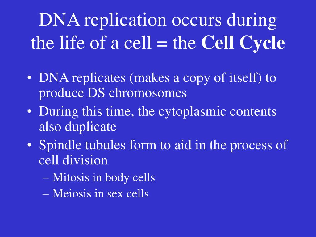 DNA replication occurs during the life of a cell = the