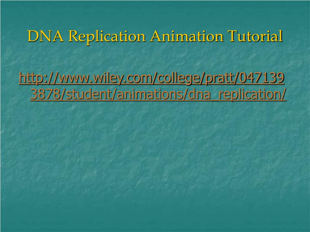 DNA Replication Animation Tutorial